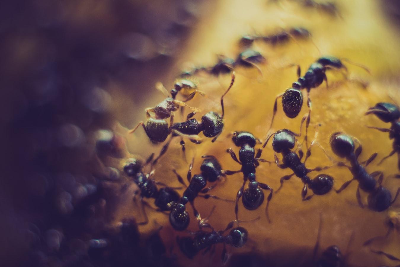 MG.Pest.Control.Ant.2019.10.11.jpg